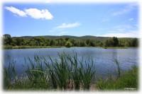 Amberson-Pond